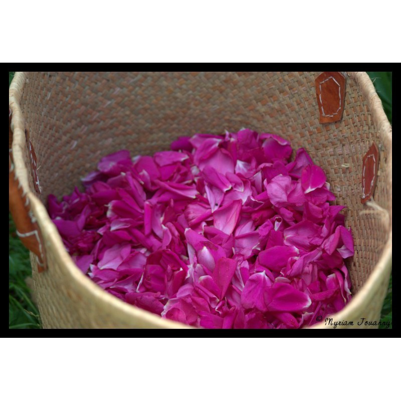 Rose d 39 orient sirop saveur sauvage for Rosier princesse d orient