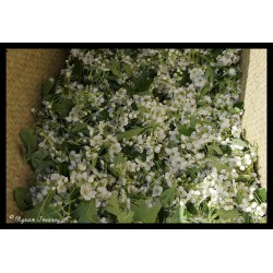 Rhubarbe fleur d'aubépine - Confiture