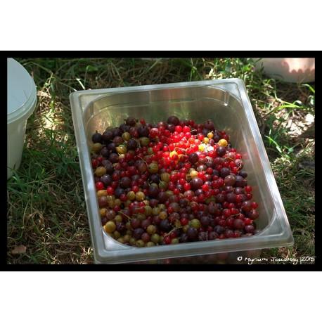 Achillée millefruits - Sirop